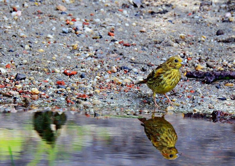 Το θηλυκό πέφτει πέρα από το νερό στοκ εικόνες με δικαίωμα ελεύθερης χρήσης