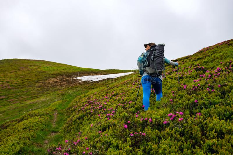 Το θηλυκό τυχοδιωκτών αναρριχείται στην πράσινη βουνοπλαγιά στοκ εικόνα