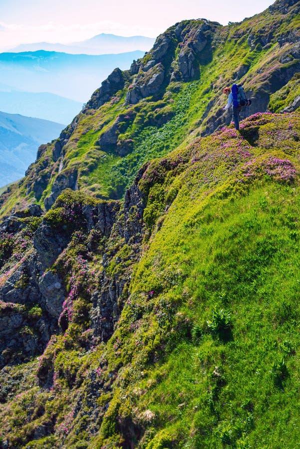 Το θηλυκό τυχοδιωκτών θαυμάζει τα wildflowers στοκ φωτογραφία με δικαίωμα ελεύθερης χρήσης