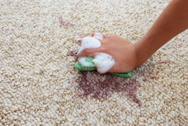 Το θηλυκό χέρι καθαρίζει τον τάπητα με το σφουγγάρι και το απορρυπαντικό στοκ εικόνες