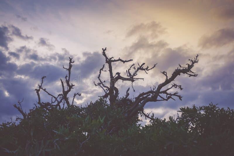 Το θλιβερό υπερφυσικό τοπίο με τη σκιαγραφία του α οι κλαδίσκοι δέντρων σε έναν νεφελώδη ουρανό στοκ εικόνες με δικαίωμα ελεύθερης χρήσης