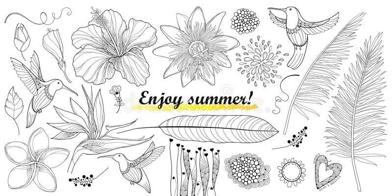 Το διάνυσμα έθεσε με τα reginae κολιβρίων περιλήψεων ή Colibri και strelitzia, hibiscus, το φύλλο plumeria, passiflora και φοινικ διανυσματική απεικόνιση
