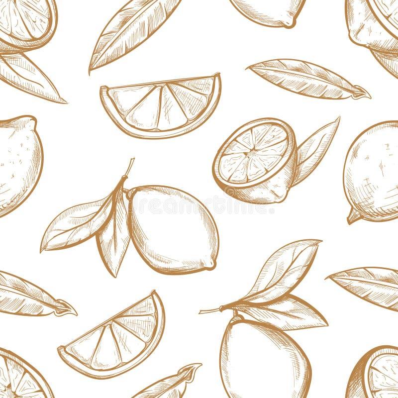 Το διανυσματικό άνευ ραφής σχέδιο με συρμένο το χέρι κλάδο λεμονιών, άνθος λεμονιών, εσπεριδοειδή τεμαχίζει και φεύγει ελεύθερη απεικόνιση δικαιώματος
