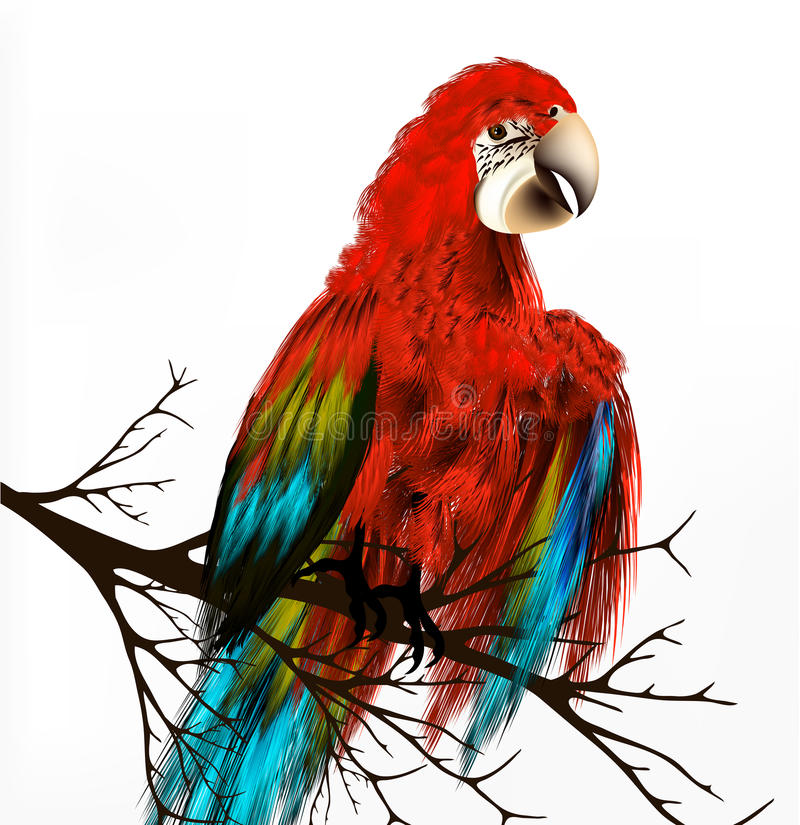 Το ζωηρόχρωμο διανυσματικό ρεαλιστικό τροπικό πουλί κάθεται έναν κλάδο στο λευκό απεικόνιση αποθεμάτων