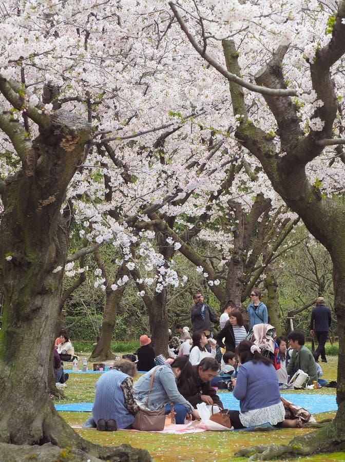 Το ιαπωνικό κεράσι απόλαυσης ανθίζει φεστιβάλ μέσα ο κήπος στοκ εικόνα με δικαίωμα ελεύθερης χρήσης