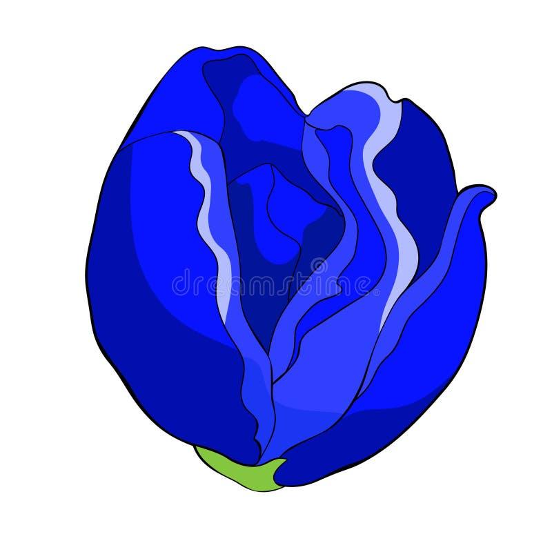 Το ιαπωνικό anemone άνθισης λουλουδιών επίσης corel σύρετε το διάνυσμα απεικόνισης ελεύθερη απεικόνιση δικαιώματος