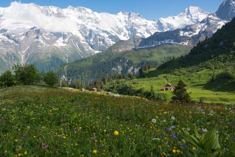 Το λιβάδι κοντά στο χωριό MÃ ¼, Ελβετία στοκ φωτογραφία