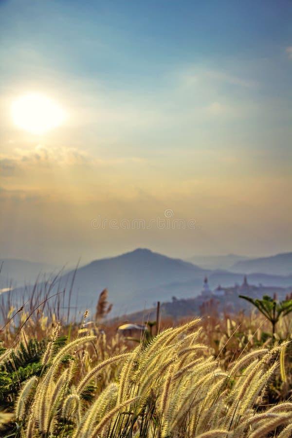 Το λιβάδι ξηρό στοκ φωτογραφία με δικαίωμα ελεύθερης χρήσης