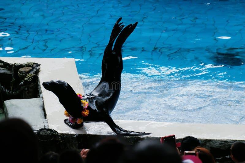 Το λιοντάρι θάλασσας παρουσιάζει στο ενυδρείο στοκ φωτογραφίες