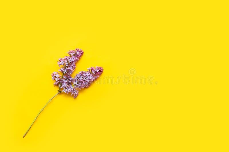 Το ιώδες άνθος στο κίτρινο επίπεδο υποβάθρου βρέθηκε Πορφυρά λουλούδια με τη τοπ άποψη φύλλων Άνοιξη, καλοκαίρι Ανθίζοντας όμορφε στοκ φωτογραφία
