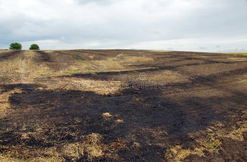 Το κάψιμο των τομέων καλαμιών στοκ εικόνες