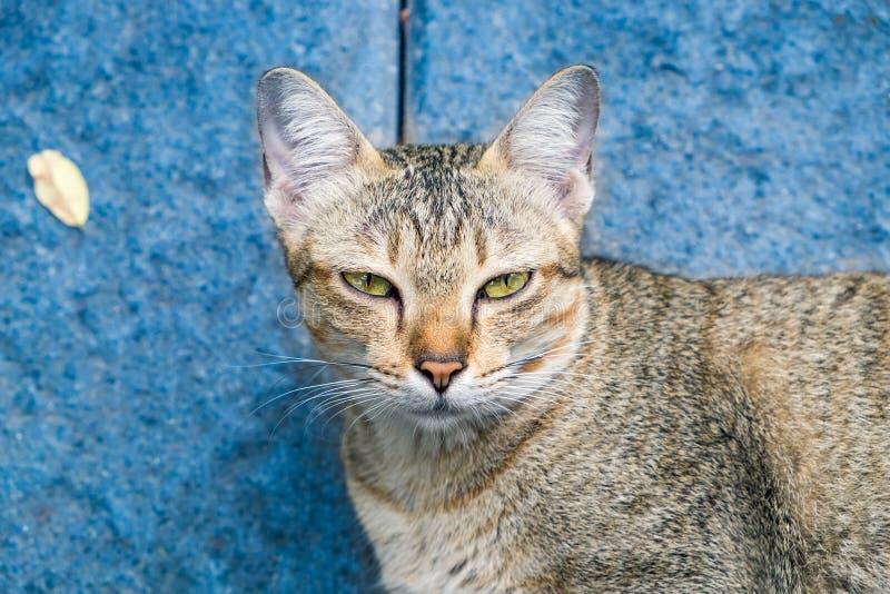Το κίτρινο κοίταγμα ματιών γατών κοιτάζει επίμονα την ανειλικρινή υποκρισία στοκ φωτογραφία