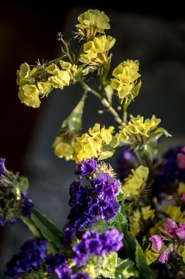 Το κίτρινο, ρόδινο, πορφυρό καλοκαίρι ανθίζει στην κινηματογράφηση σε πρώτο πλάνο ανθοδεσμών στο σκοτάδι στοκ φωτογραφία με δικαίωμα ελεύθερης χρήσης