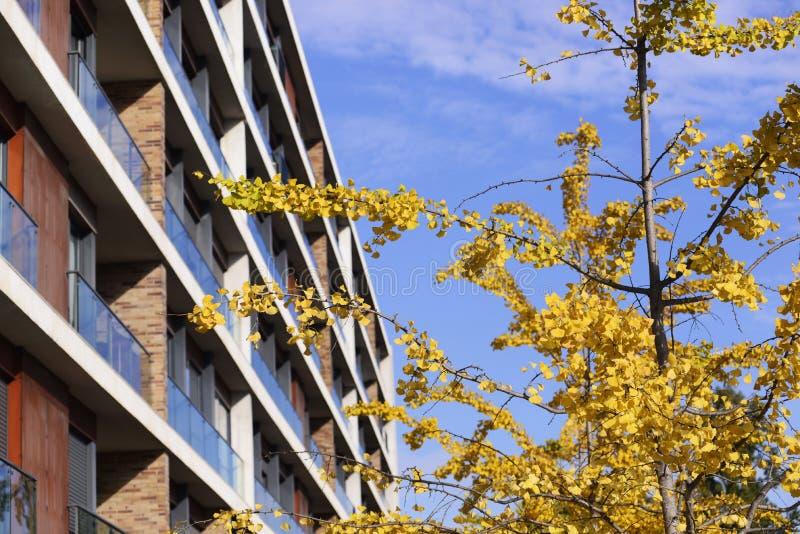 Το κίτρινο φθινόπωρο βγάζει φύλλα, μπλε ουρανός, ιδιωτικό Condo στοκ εικόνες