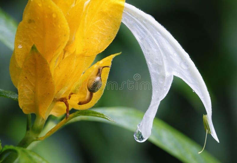 Το κίτρινο φρέσκο λουλούδι στοκ εικόνα με δικαίωμα ελεύθερης χρήσης