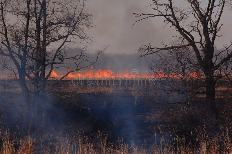 Το καίγοντας ξύλο στην περιοχή της Μόσχας στοκ φωτογραφίες με δικαίωμα ελεύθερης χρήσης
