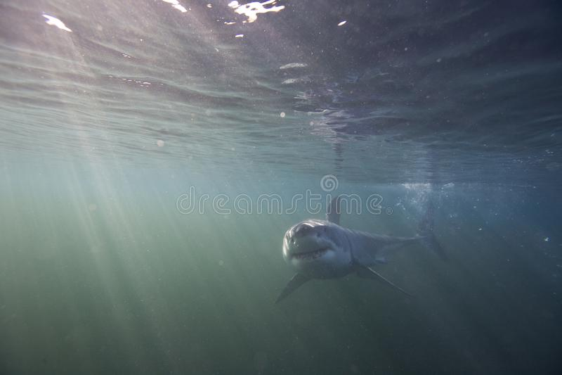 Το Καίηπ Τάουν, καρχαρίες, υποβρύχιες απόψεις, φαίνεται μεγάλο, το καθένα πρέπει να δει αυτήν την σκηνή μιά φορά στη ζωή σας στοκ εικόνες