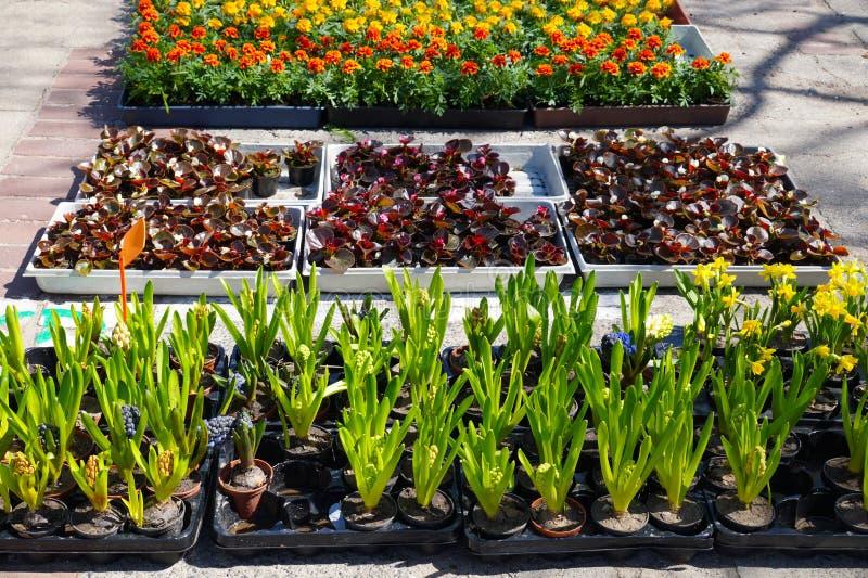 Το κατάστημα κήπων, οι εγκαταστάσεις στα εμπορευματοκιβώτια και τα δοχεία βάζουν επάνω για την πώληση στοκ εικόνα με δικαίωμα ελεύθερης χρήσης