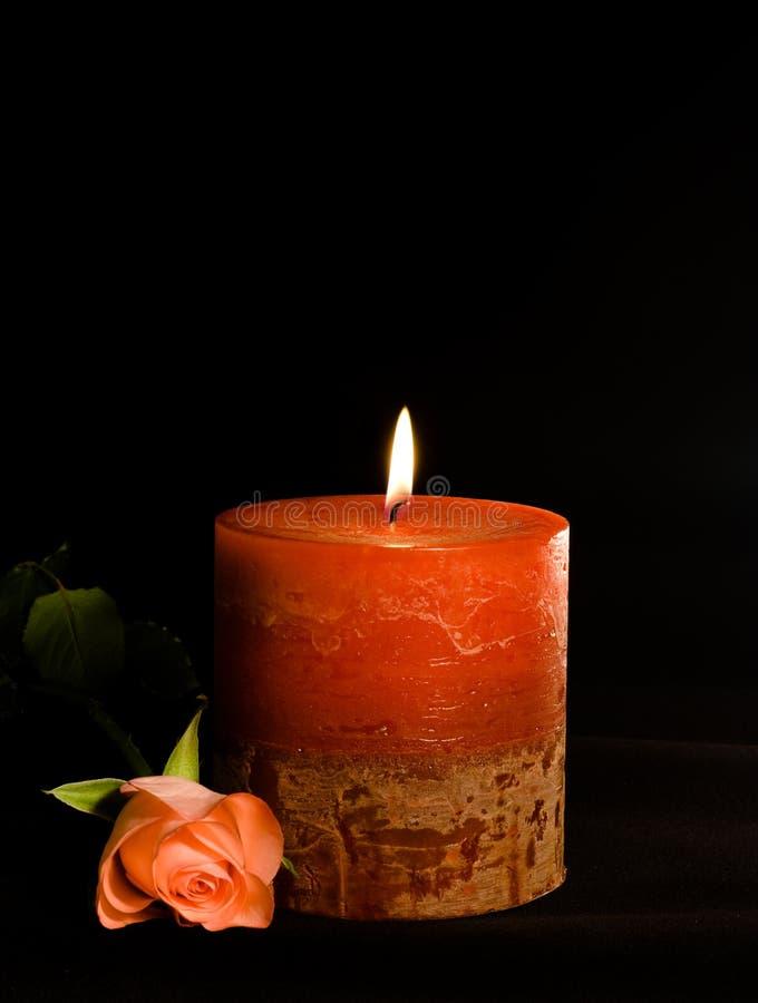 το κερί αυξήθηκε στοκ φωτογραφία