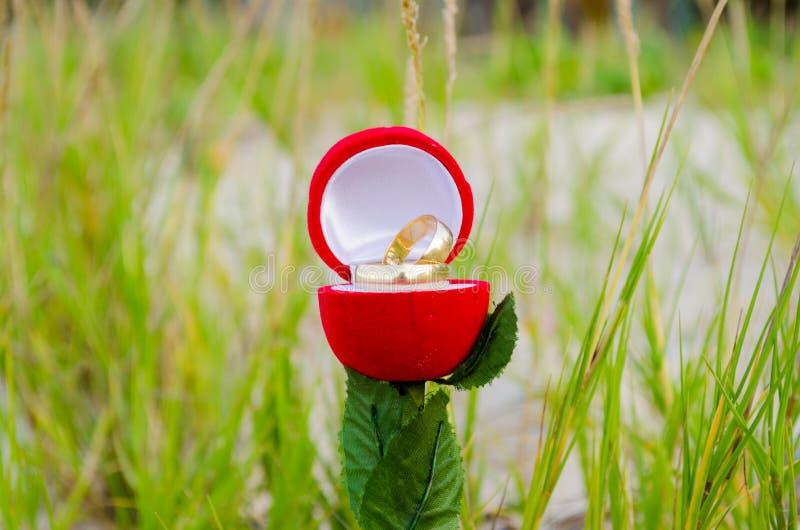 Το κιβώτιο συμμαχίας αυξήθηκε διαμορφωμένος, ανοιγμένος με τα γαμήλια δαχτυλίδια μέσα σε ένα πράσινο, θολωμένο υπόβαθρο στοκ εικόνα με δικαίωμα ελεύθερης χρήσης