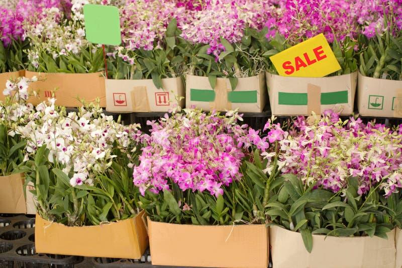 Το κιβώτιο του λουλουδιού ορχιδεών είναι στην πώληση στην αγορά εγκαταστάσεων στοκ φωτογραφία