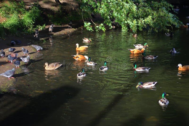 Το Κοινοβούλιο των πουλιών Τα διαφορετικά πουλιά σύλλεξαν μαζί στη λίμνη στοκ φωτογραφίες με δικαίωμα ελεύθερης χρήσης