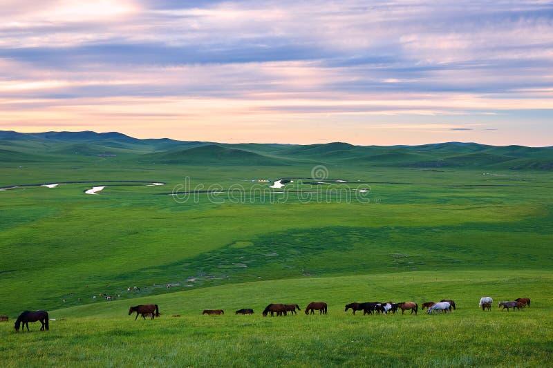 Το κοπάδι στη βουνοπλαγιά του ηλιοβασιλέματος στεπών στοκ εικόνες με δικαίωμα ελεύθερης χρήσης