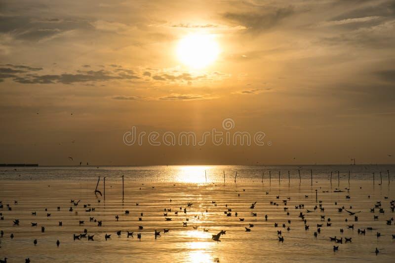 Το κοπάδι seagulls μεταναστεύει στον κόλπο θάλασσας της Ταϊλάνδης στοκ εικόνες