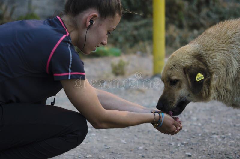Το κορίτσι δίνει το νερό στο σκυλί στοκ εικόνες