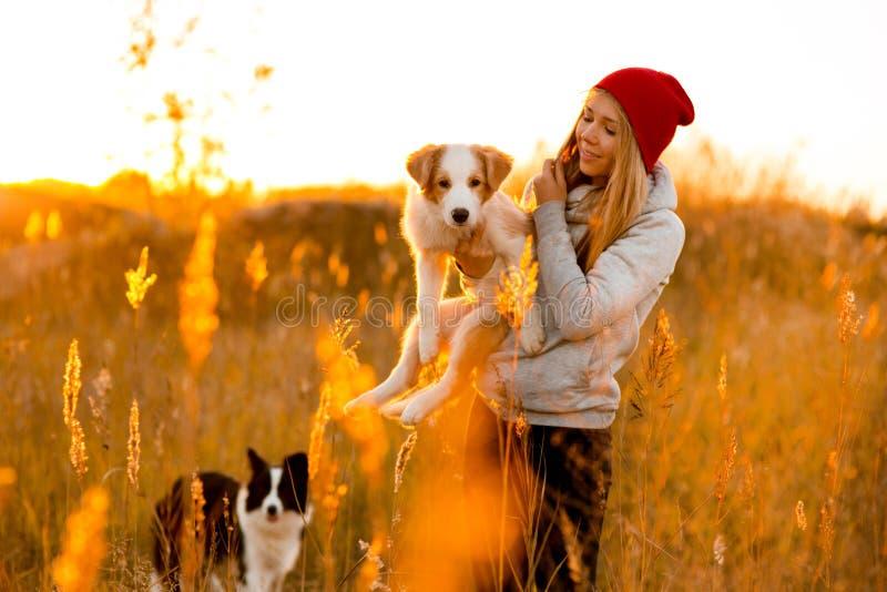 Το κορίτσι γέλιου με το δροσερό κουτάβι σκυλιών κόλλεϊ συνόρων δύο παραδίδει επάνω τον πράσινο τομέα ηλιοβασίλεμα ουρανού στο υπό στοκ φωτογραφίες με δικαίωμα ελεύθερης χρήσης
