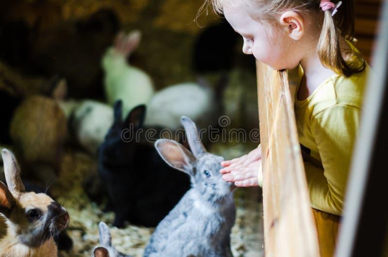 Το κορίτσι εξετάζει τα κουνέλια στο ζωολογικό κήπο στοκ εικόνες