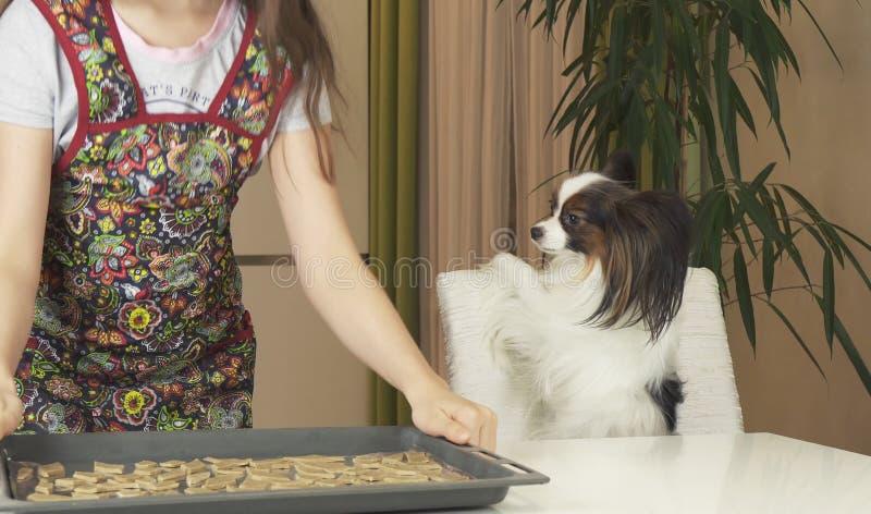 Το κορίτσι και το σκυλί Papillon εφήβων προετοιμάζουν τα μπισκότα, βάζουν το τηγάνι ζύμης στο φούρνο στοκ φωτογραφία