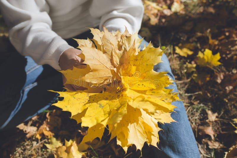 Το κορίτσι κρατά στα χέρια μια δέσμη των κίτρινων φύλλων σφενδάμου στοκ εικόνα με δικαίωμα ελεύθερης χρήσης