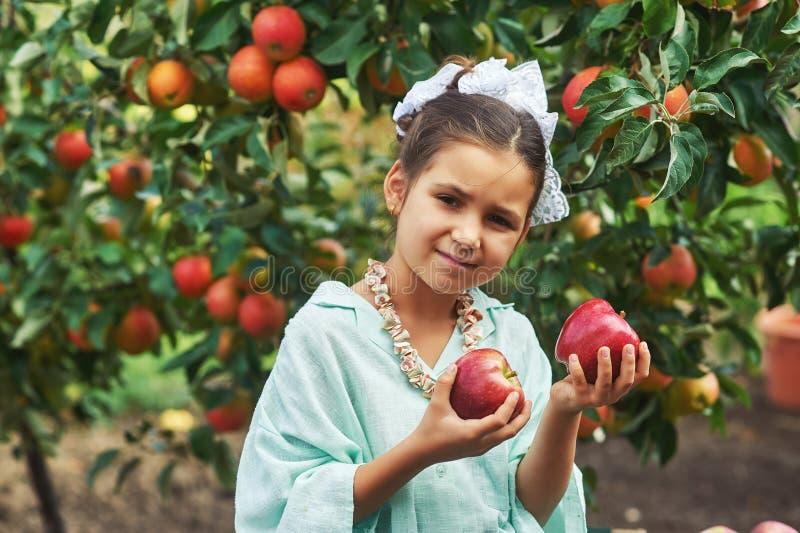 Το κορίτσι κρατά τα φρέσκα μήλα Η συγκομιδή των μήλων στοκ φωτογραφίες με δικαίωμα ελεύθερης χρήσης