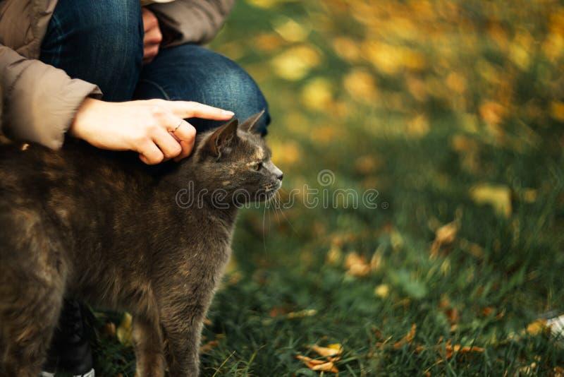 Το κορίτσι κτυπά μια περιπλανώμενη γκρίζα όμορφη ευμετάβλητη γάτα στη χλόη στοκ εικόνα