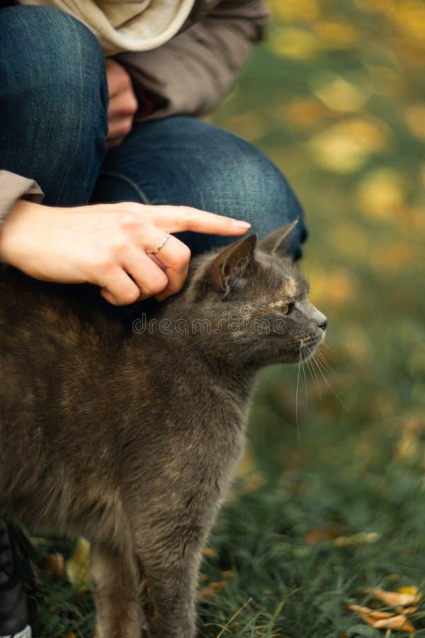 Το κορίτσι κτυπά μια περιπλανώμενη γκρίζα όμορφη ευμετάβλητη γάτα στη χλόη στοκ εικόνα με δικαίωμα ελεύθερης χρήσης