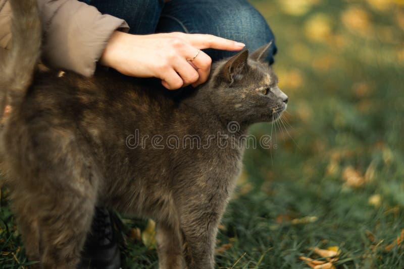 Το κορίτσι κτυπά μια περιπλανώμενη γκρίζα όμορφη ευμετάβλητη γάτα στη χλόη στοκ φωτογραφία με δικαίωμα ελεύθερης χρήσης