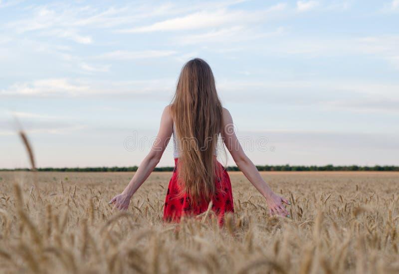 Το κορίτσι με τη μακρυμάλλη στάση με την πίσω στον τομέα σίτου τα χέρια και θαυμασμός του ουρανού βραδιού στοκ εικόνες με δικαίωμα ελεύθερης χρήσης