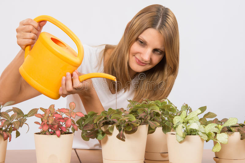 Το κορίτσι ποτίζει τα λουλούδια από ένα σπίτι ποτίσματος στοκ εικόνες