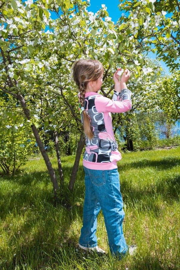 Το κορίτσι ρουθουνίζει τα ανθίζοντας λουλούδια μήλων στον οπωρώνα στοκ εικόνα