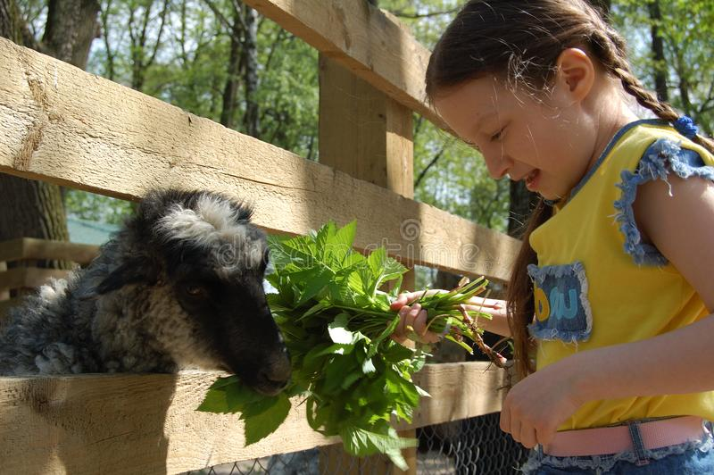 Το κορίτσι στο αγρόκτημα στοκ εικόνα