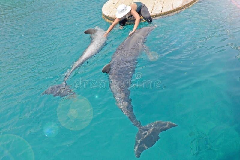 Το κορίτσι στο καπέλο κτυπά τα δελφίνια και τα φροντίζει Ηλιόλουστη ημέρα με τα εύθυμα ζώα, τη συντήρηση και την προστασία στοκ φωτογραφίες