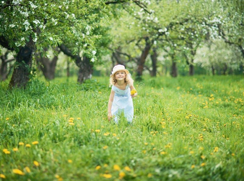 Το κορίτσι συλλέγει την ανθοδέσμη πικραλίδων για ένα στεφάνι στο λιβάδι του orhard στοκ εικόνες