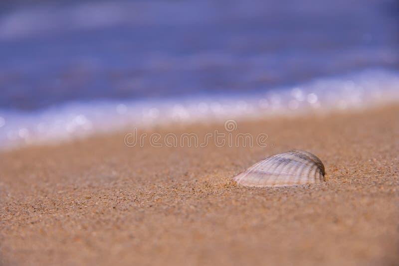 Το κοχύλι βρίσκεται στην ακτή πίσω από τα κύματα και τη θάλασσα στοκ φωτογραφίες με δικαίωμα ελεύθερης χρήσης