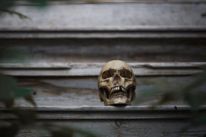 Το κρανίο ενός ανθρώπου που βρίσκεται στα σκαλιά μιας παλιάς ξύλινης σκάλας, φωτισμένο από το φως στοκ εικόνες