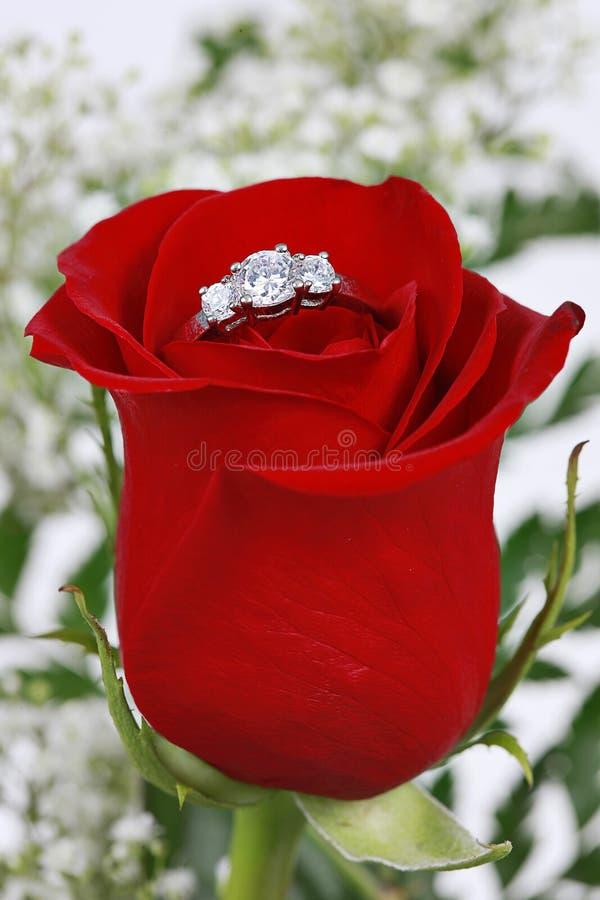 το κόκκινο δαχτυλίδι πε&tau στοκ εικόνες
