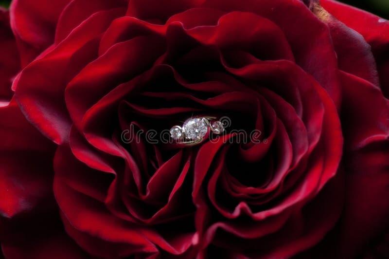 Το κόκκινο διαμαντιών αυξήθηκε στοκ εικόνες