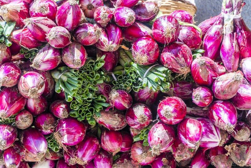 Το κόκκινο κρεμμύδι πώλησε στις οδούς Tropea ως ειδικότητα της περιοχής, της Ιταλίας στοκ εικόνα με δικαίωμα ελεύθερης χρήσης