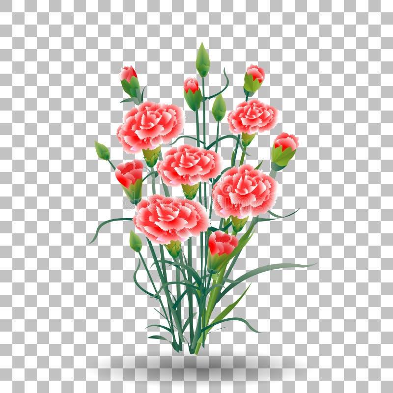 Το κόκκινο λουλούδι γαρίφαλων schabaud, πράσινος μίσχος, φεύγει στο διαφανές υπόβαθρο, συλλογή για την ημέρα μητέρων s, ημέρα νίκ απεικόνιση αποθεμάτων