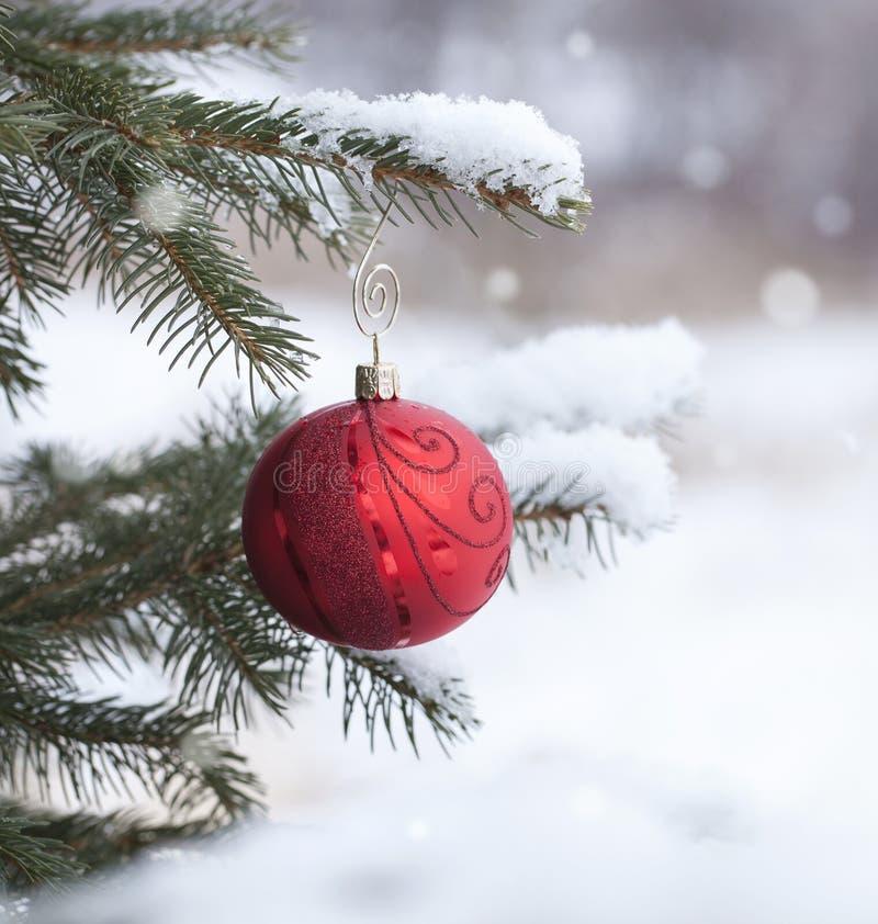 Το κόκκινο μπιχλιμπίδι Χριστουγέννων με στο χιονώδη κλάδο πεύκων το backgro στοκ εικόνες